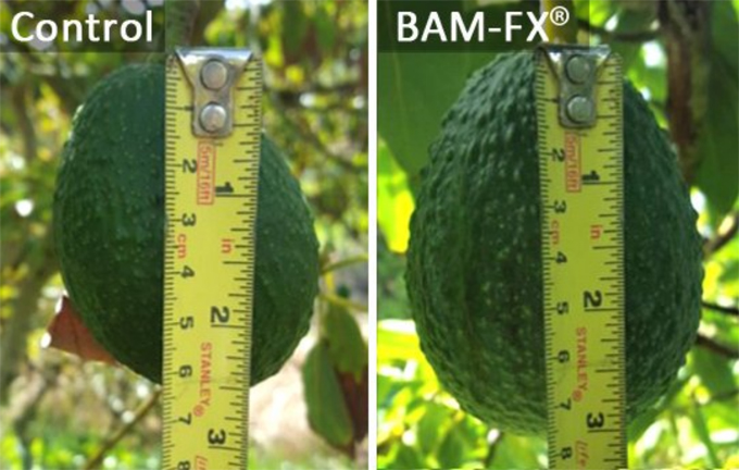 BAM Agricultural Solutions Signs Exclusive Distribution Agreement for the Country of Mexico