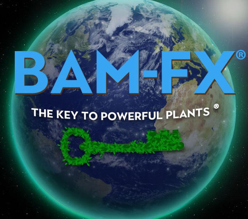 Contact, Contact us, Contact BAM-FX